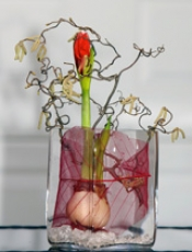 amaryllis im glas dekorieren ostseesuche com. Black Bedroom Furniture Sets. Home Design Ideas